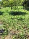 Kestel Lütfiye Köyünde Satılık Arazi