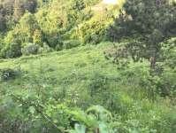 Kestel Burhaniye Köyünde Satılık Hobi Bahçeleri