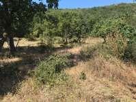 Kestel Gölcük Köyünde Ormana Sınır Satılık Tarla