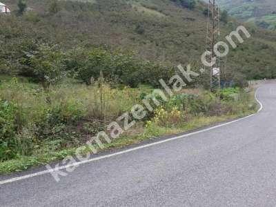 Trabzon Gürbulakta Kiralık 6 Dönüm Arazi 1