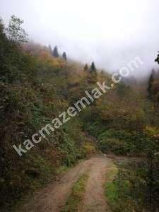 Trabzon Yomrada Satılık 12.478 M2 Arazi 6