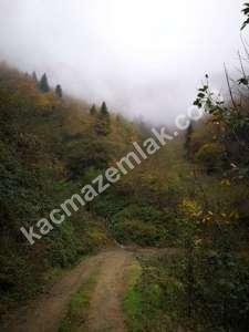 Trabzon Yomrada Satılık 12.478 M2 Arazi 5