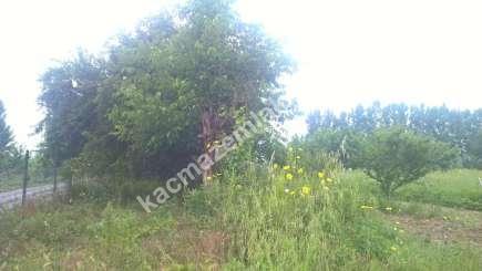 İnegöl Küçükyenice Köyü Satılık Olgun Meyve Bahçesi 6