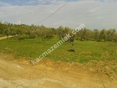 Mudanya Akköy De Daire İle Takas Edilir İmarlı Bahçe