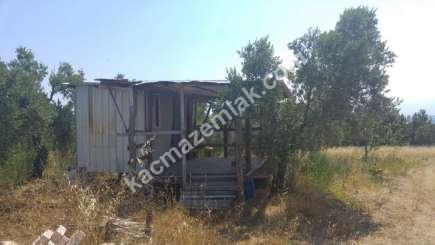 Mudanya Küçük Yenice Mahallesinde Acil Satılık Bahçe. 1