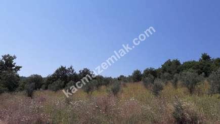 Yenişehir Fethiye Köyü Mah Satılık Zeytin Bahçesi Arazi 13