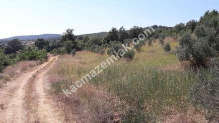 Yenişehir Fethiye Köyü Mah Satılık Zeytin Bahçesi Arazi 14