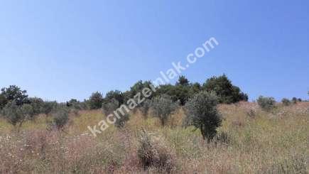 Yenişehir Fethiye Köyü Mah Satılık Zeytin Bahçesi Arazi 12
