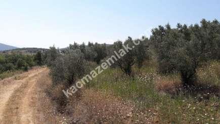 Yenişehir Fethiye Köyü Mah Satılık Zeytin Bahçesi Arazi 7