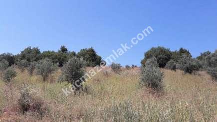 Yenişehir Fethiye Köyü Mah Satılık Zeytin Bahçesi Arazi 11