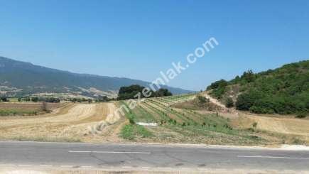 Yenişehir Selimiye Köyü Mah Satılık Cevizlik Tarla 1