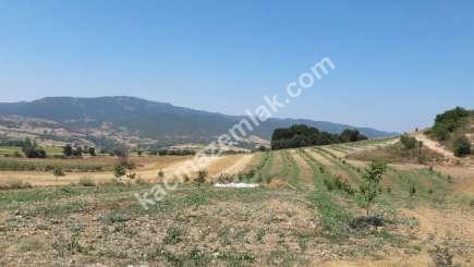 Yenişehir Selimiye Köyü Mah Satılık Cevizlik Tarla 5