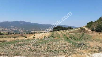 Yenişehir Selimiye Köyü Mah Satılık Cevizlik Tarla 4