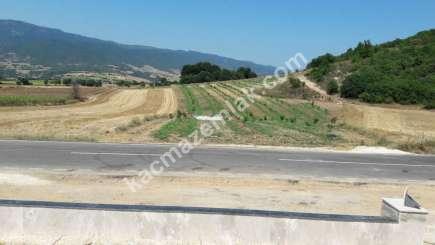 Yenişehir Selimiye Köyü Mah Satılık Cevizlik Tarla 2