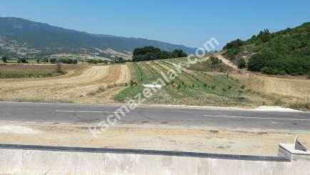 Yenişehir Selimiye Köyü Mah Satılık Cevizlik Tarla 3
