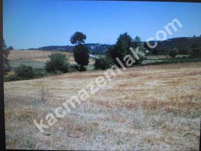 Diyarbakır Karabaş Mah.satılık 22.Dönüm.tek Tapulu Arsa 2