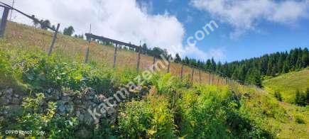 Trabzon Kaya Başı Yaylasında Satılık 1 Dönüm Arsa..! 2