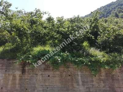 Trabzon Çaykara Koldere De Satılık 2450 M2 Arsa 16