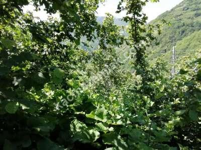 Trabzon Çaykara Koldere De Satılık 2450 M2 Arsa 11