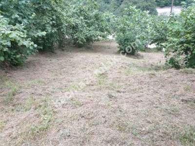 Trabzon Çaykara Koldere De Satılık 2450 M2 Arsa 1