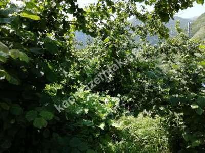 Trabzon Çaykara Koldere De Satılık 2450 M2 Arsa 10