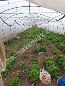 Bigada Yol Üstü Acil Satılık Besi Çiftliği Mandıra Sera 6