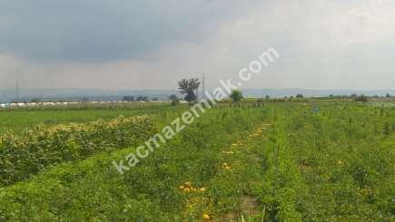 Karacabey Canbaz Köyde Satılık Tarla