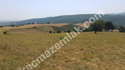 Kestel Erdoğan Köyde Satılık Tarla-Çiftlik 11