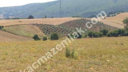 Kestel Erdoğan Köyde Satılık Tarla-Çiftlik 8