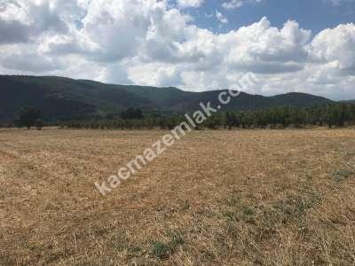 Kestel Gölcük Köyünde Satılık Tarıma Uygun Tarla 4