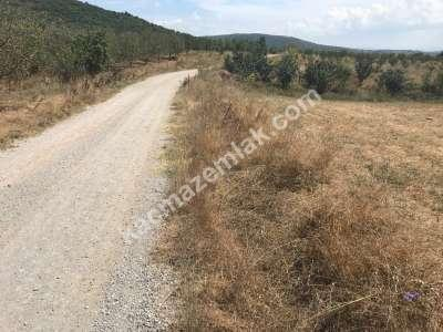 Kestel Gölcük Köyünde Satılık Tarıma Uygun Tarla 5