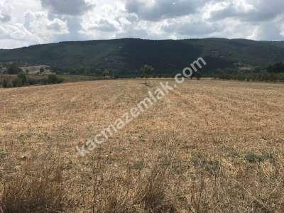 Kestel Gölcük Köyünde Satılık Tarıma Uygun Tarla 2