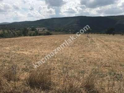 Kestel Gölcük Köyünde Satılık Tarıma Uygun Tarla 3