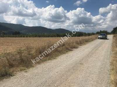 Kestel Gölcük Köyünde Satılık Tarıma Uygun Tarla 8