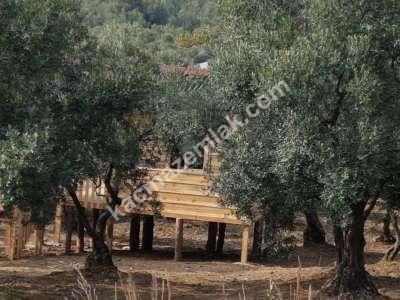 Mudanya Çepni Köyünde Kadastro Yoluna Cephe Tarla 3