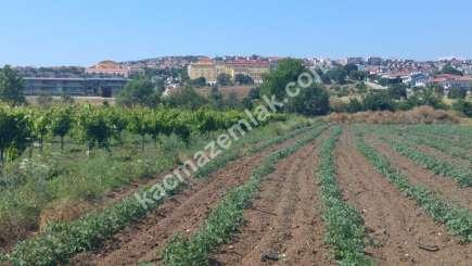 Mudanya Hasköy Mah Satılık Kelepir Harika Arazi Bağ