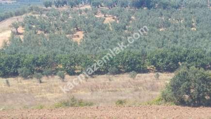 Mudanya İlçesi Mürsel Köyde Satılık İmara Yakın Tarla. 1