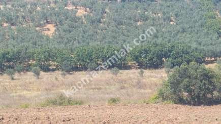 Mudanya İlçesi Mürsel Köyde Satılık İmara Yakın Tarla. 6