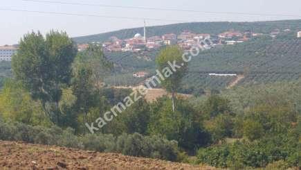 Mudanya İlçesi Mürsel Köyde Satılık İmara Yakın Tarla. 7