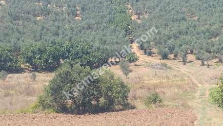 Mudanya İlçesi Mürsel Köyde Satılık İmara Yakın Tarla. 2