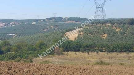 Mudanya İlçesi Mürsel Köyde Satılık İmara Yakın Tarla. 3