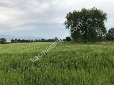 Orhangazi Gürle Köyünde Tarıma Uygun Satılık Tarla 15