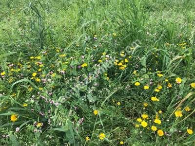 Orhangazi Gürle Köyünde Tarıma Uygun Satılık Tarla 11