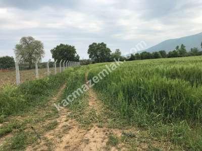 Orhangazi Gürle Köyünde Tarıma Uygun Satılık Tarla 2