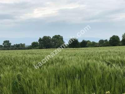 Orhangazi Gürle Köyünde Tarıma Uygun Satılık Tarla 10