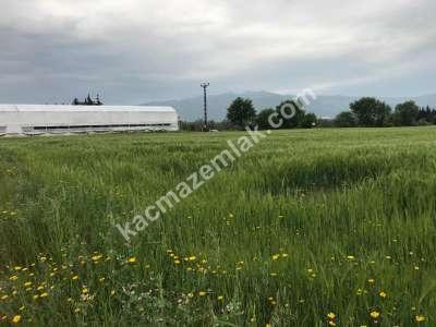 Orhangazi Gürle Köyünde Tarıma Uygun Satılık Tarla 13