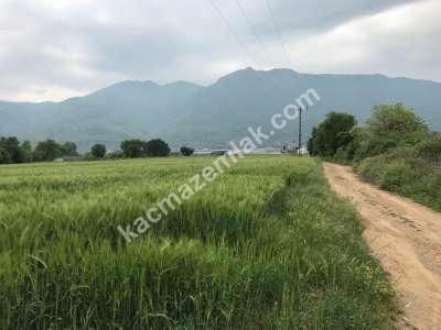 Orhangazi Gürle Köyünde Tarıma Uygun Satılık Tarla 1