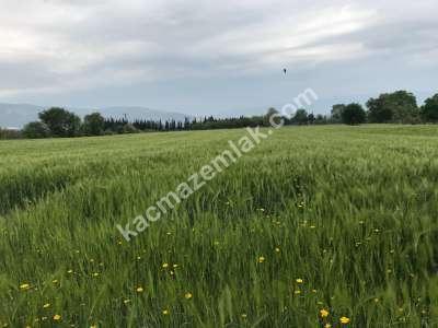 Orhangazi Gürle Köyünde Tarıma Uygun Satılık Tarla 12