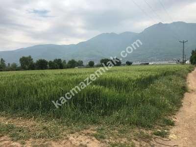 Orhangazi Gürle Köyünde Tarıma Uygun Satılık Tarla 4