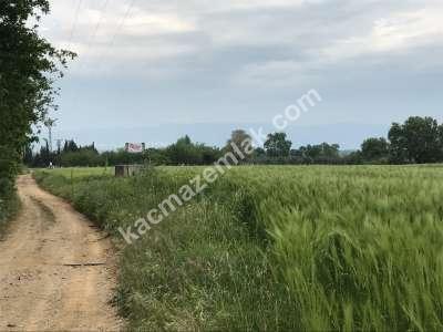Orhangazi Gürle Köyünde Tarıma Uygun Satılık Tarla 9